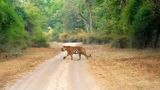 Bandhavgarh - Places to visit in India in Summer
