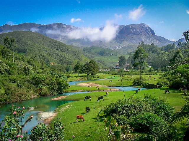 Munnar: Of Teas and Twists