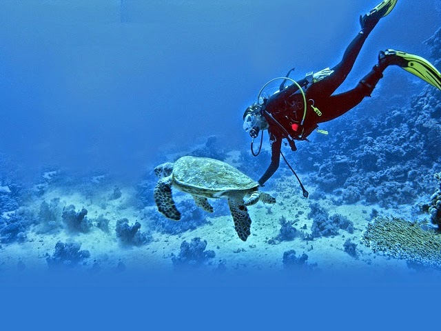Snorkeling in India