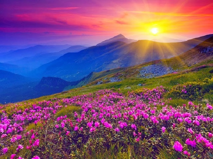 The Valley of the flowers - One of the Natural wonders of the world